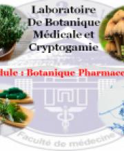 Dr. Abdelkader AMROUNE